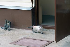 Первым идет кошка Кимры