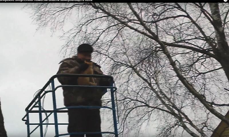 Кимрские энергетики помогли спасти замерзающего кота (видео)