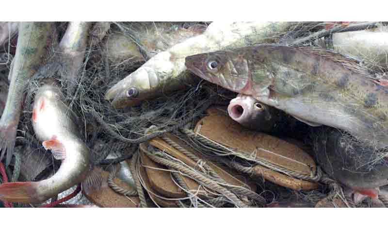 Ловите рыбу по правилам