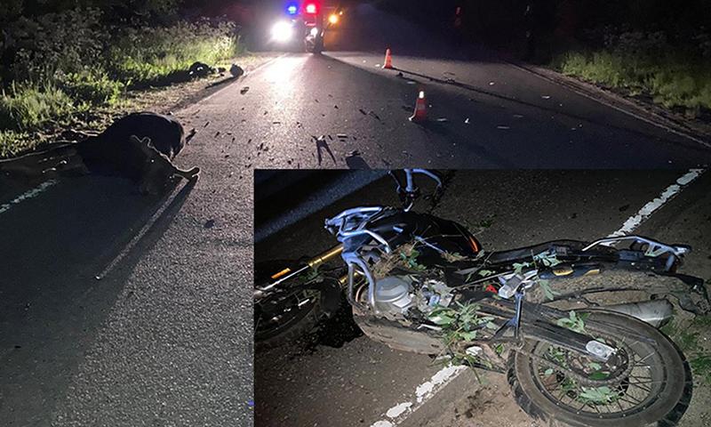 Мотоциклист сбил лося и погиб